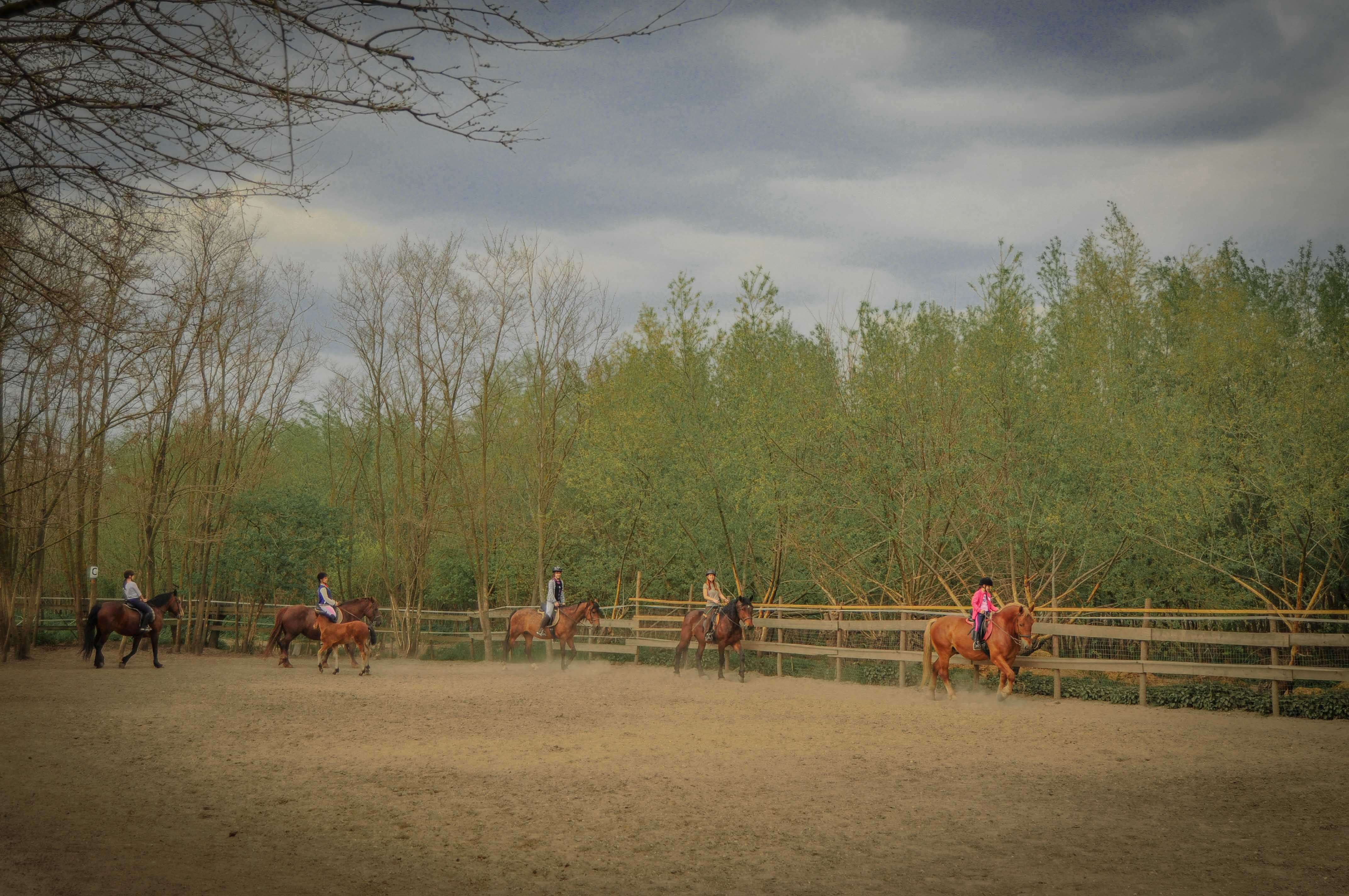NanaFarm (aka) HorsesLand 22