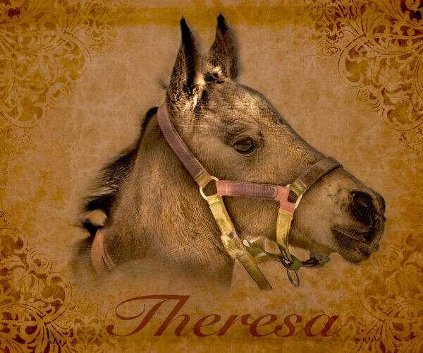 Să o cunoaștem pe Theresa