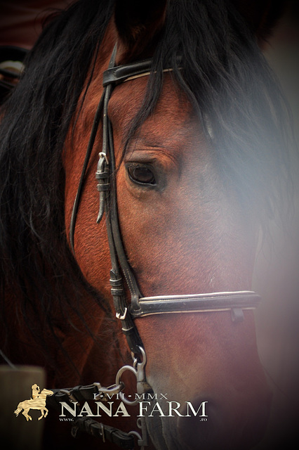NanaFarm - HorsesLand * echitatie * 041